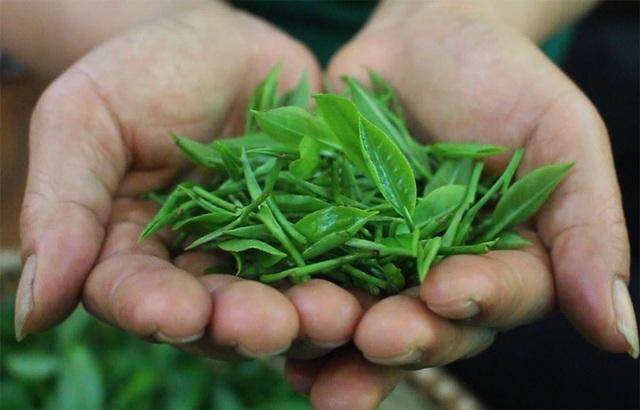 3 triệu đồng/kg trà đinh, khách xếp hàng mua 'vàng ròng' thưởng Tết