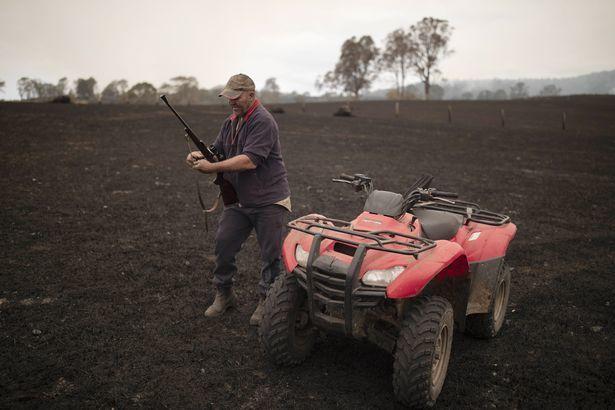 Xót xa nông dân Úc tự tay bắn chết bò bị bỏng nặng do cháy rừng