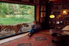 Ngủ qua đêm cùng sư tử, hổ: Trải nghiệm độc lạ có một không hai