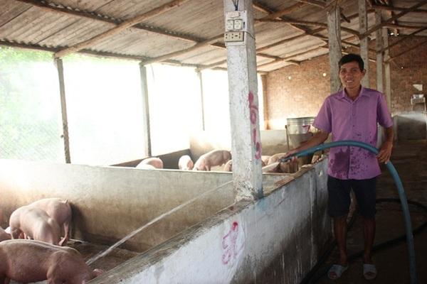 Từ 500 con gà, nông dân thu về 12 tỷ đồng/năm