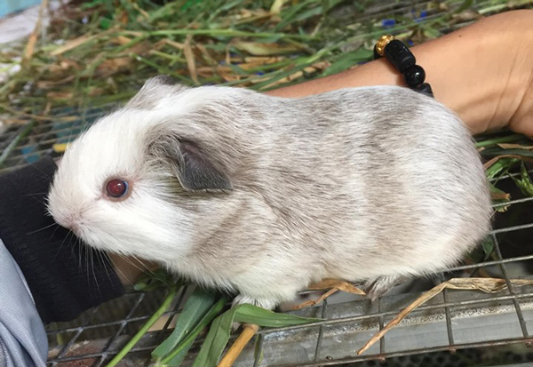 Kỳ lạ: Bỏ ra cả triệu đồng để mua một con chuột về ngắm chơi