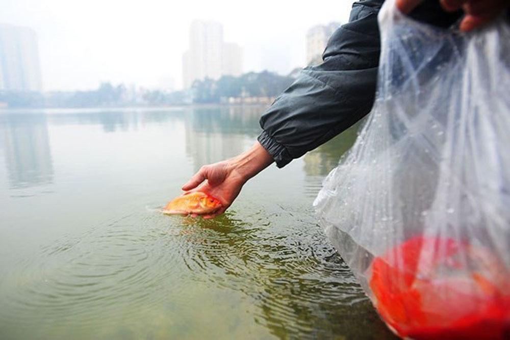 Thả cá chép ngày ông Công ông Táo thế nào cho đúng?