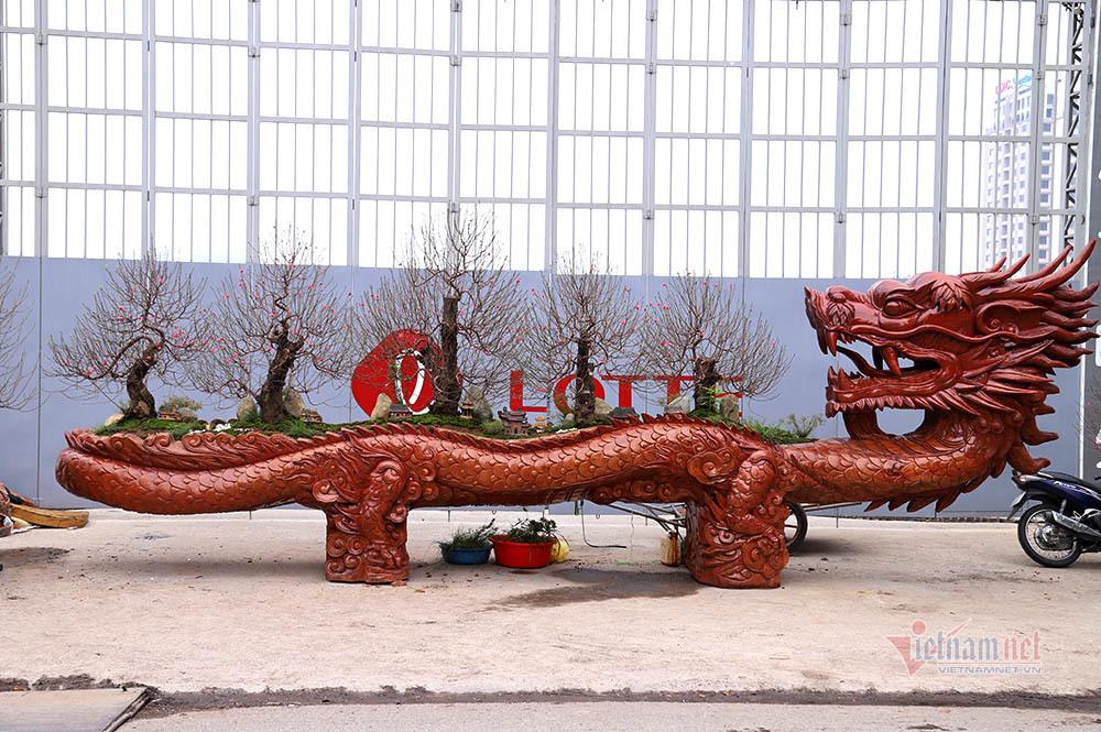 Rồng cuộn ngũ cây tiền tỷ giữa phố Hà Nội, khách qua đường xuýt xoa