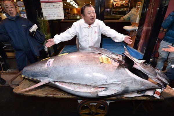 Mạnh tay chi hơn 41 tỷ đồng mua cá ngừ 'khủng'