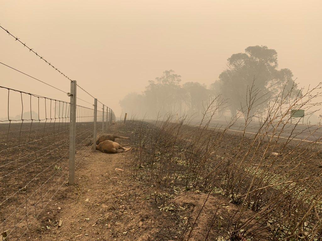 Hình ảnh tàn khốc về thảm họa cháy rừng ở Australia
