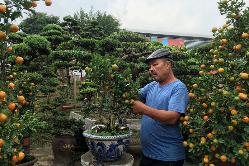 Quất 'thăng tiến' bonsai gây sốt, giá chục triệu hút khách dịp Tết