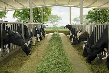 4 nguyên tắc 'chuẩn' làm nên chất lượng sữa Cô Gái Hà Lan