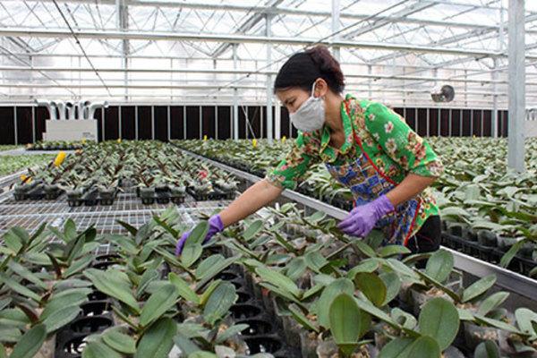 Thụy Hương: Sau 2 năm đào tạo nghề cho LĐNT đã đáp ứng được 80% nhu cầu
