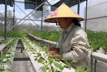 Hà Nội: Dự kiến đào tạo 8.300 lao động nông thôn cho năm 2020