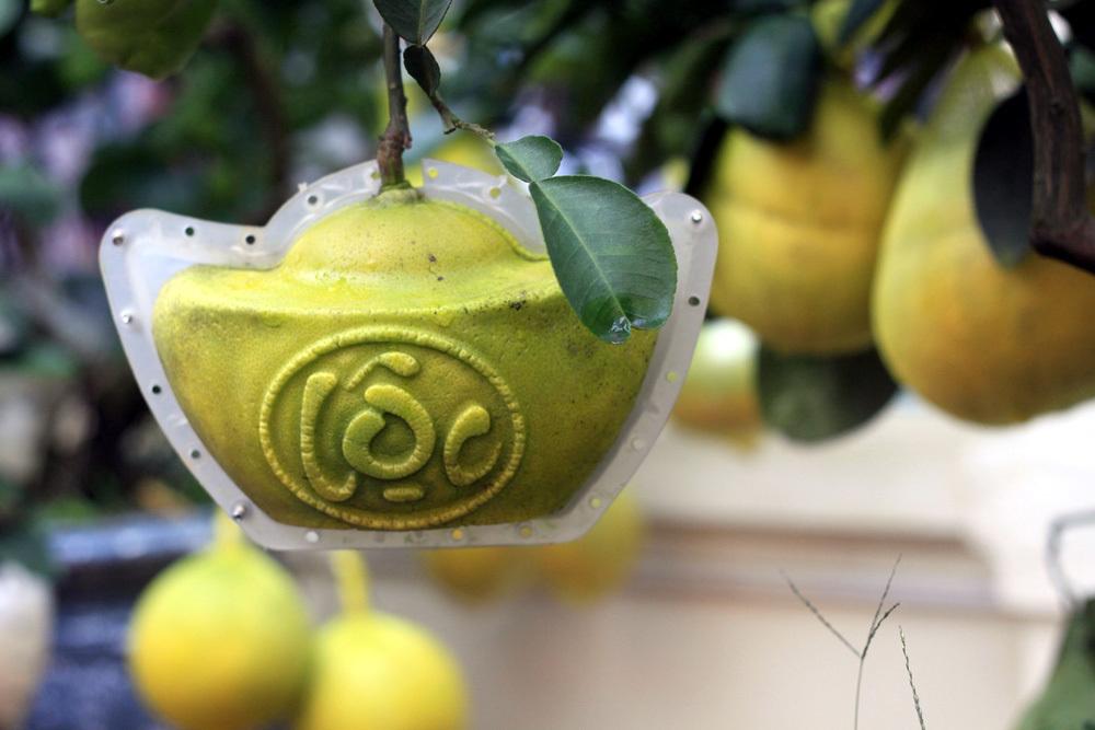 Đặc sản Hà thành thỏi vàng trên cây, 'hàng độc' để ngắm không ăn