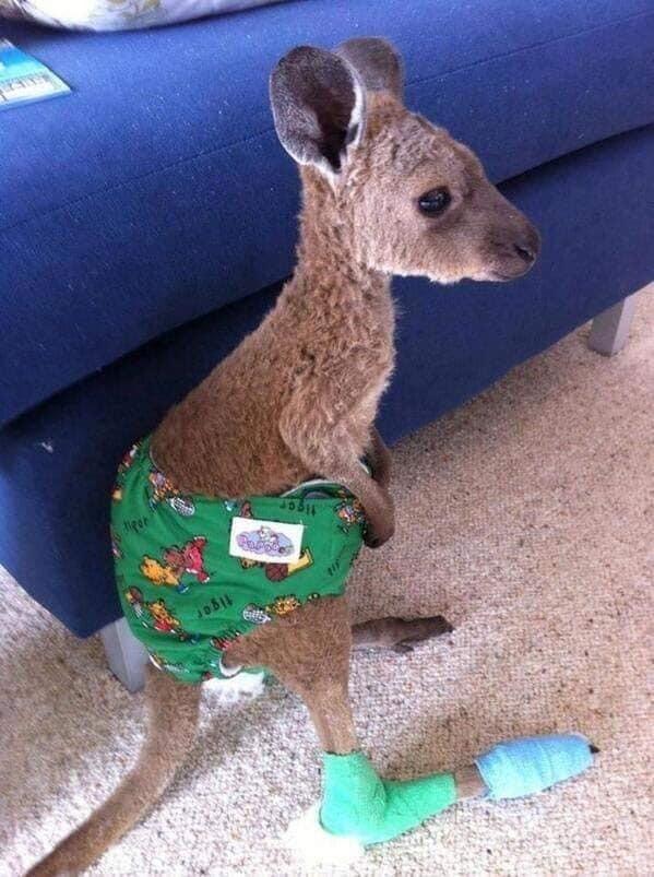 Những hình ảnh ấm lòng trong thảm họa cháy rừng Australia