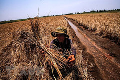 Saltwater intrusion to enter deeper in Mekong Delta