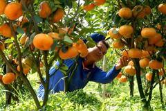 Minh chứng sống động về kết quả của Chương trình đào tạo nghề cho lao động nông thôn