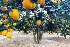Đào tạo nghề cho lao động nông thôn: Điểm sáng ở xã Phúc Ninh