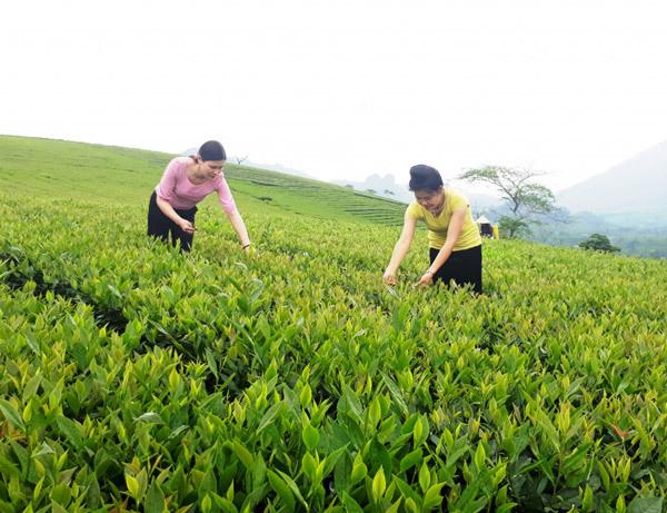Đào tạo nghề cho đồng bào dân tộc Văn Chấn