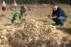 Nông dân Lục Khu thoát nghèo nhờ học làm nông nghiệp hữu cơ