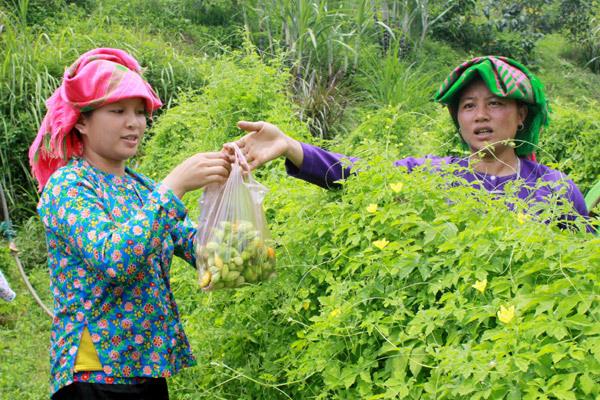 Đào tạo nghề cho lao động nông thôn ở miền núi phía bắc