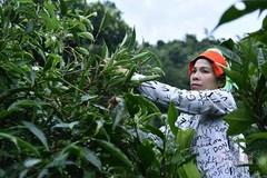 Sau học nghề, 100% nông dân Bạch Thông biết áp dụng kiến thức vào sản xuất