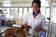 Kiến nghị cấp lại bằng bác sĩ thú y sau 10 năm