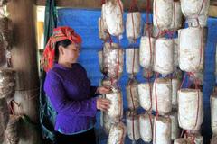 Xã Thanh Nưa, huyện Ðiện Biên mở 4 lớp dạy nghề nông nghiệp