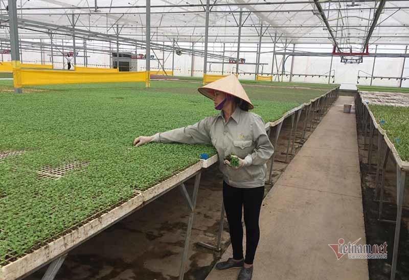 Nông dân TP.HCM được dạy làm nông nghiệp công nghệ cao