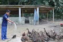 Tuần Giáo hướng đến nông thôn mới bằng đào tạo nghề cho lao động nông thôn