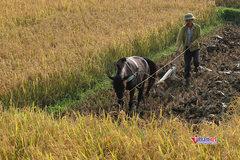 Hải Phòng: Dạy nông dân làm nông nghiệp công nghệ cao