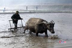Quảng Bình chi 48 tỷ đồng đào tạo nghề cho lao động nông thôn