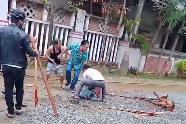 Chó Pitbull tuột xích, xông ra cắn nát tay người phụ nữ ở Quảng Nam