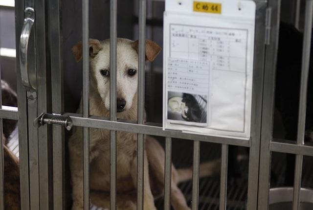 Nhóm khách Việt ngồi tù, bị phạt 770 triệu vì giết hại và ăn thịt chó