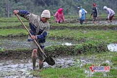 Bắc Giang: Lao động nông thôn được đào tạo nghề nuôi cá nước ngọt