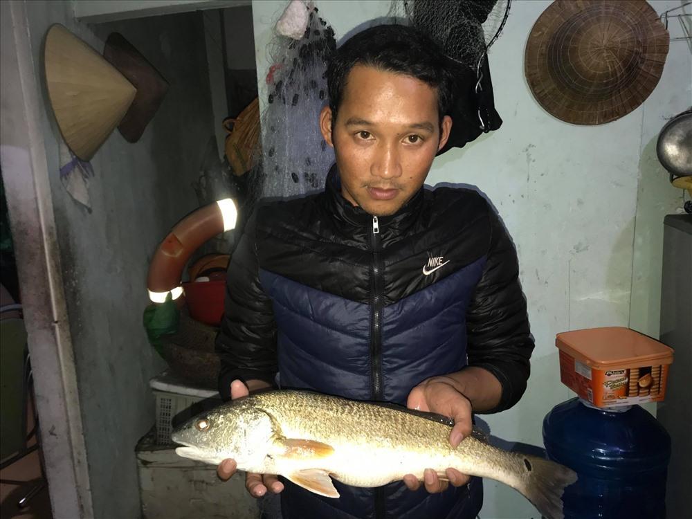 Ngư dân Đà Nẵng bắt được cá sủ vàng quý hiếm