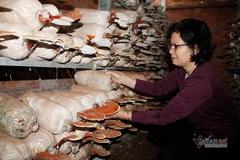 """Học nghề trồng nấm, lao động nông thôn ở Đắk Lắk """"đổi đời"""""""