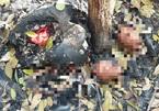 Phát hiện thêm 7 bộ xương người gần vườn cao su ở Tây Ninh