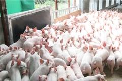 Đào tạo nghề Chăn nuôi thú y cho nông dân Hà Nội