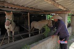 Yên Bình: Đào tạo nghề nông nghiệp gắn với tái cơ cấu ngành