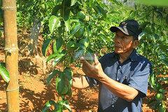 Hưởng lợi từ EVFTA, trái cây Việt đổ bộ sang châu Âu