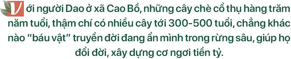 chè hữu cơ,chè cổ,chè shan tuyết,Hà Giang