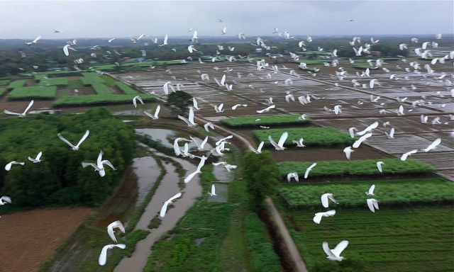Thua Thien Hue,wild birds,wildlife protection