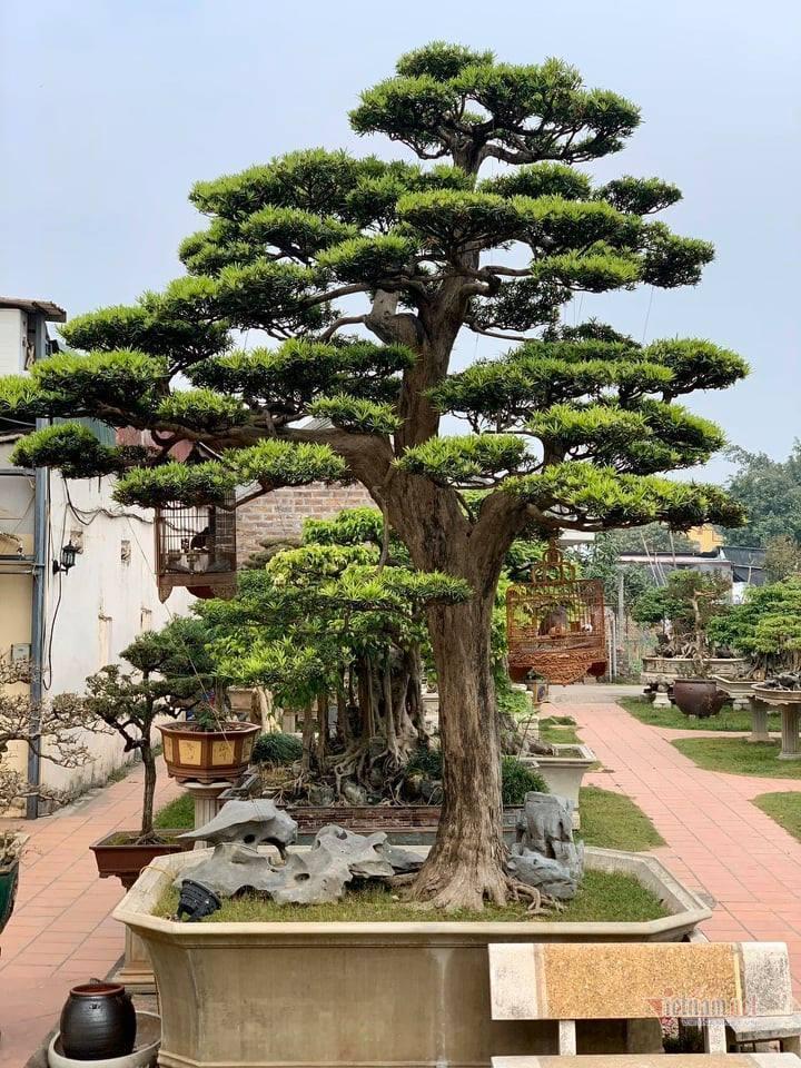 Cây cảnh,Nhà vườn