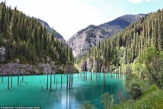 Rừng cây mọc ngược giữa hồ nước