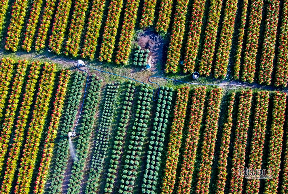 làng hoa,hoa tết,Tết Canh Tý