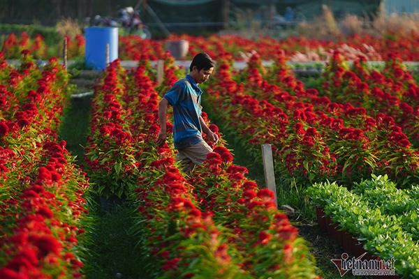 Hương xuân phủ khắp làng hoa ngoại thành Sài Gòn