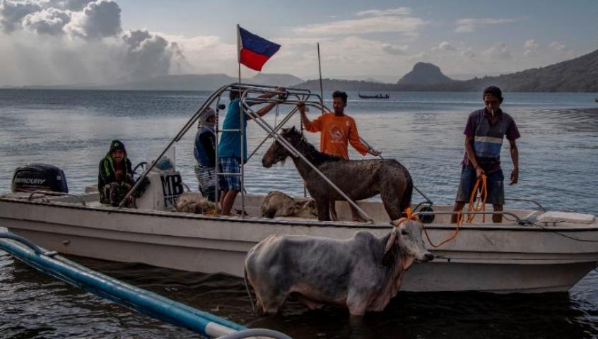 Cảnh hoang tàn gần núi lửa Philippines, xác bò ngựa chôn vùi trong tro bụi