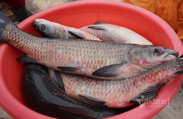 Xuyên đêm hít khói, kho 5.000 nồi cá bán Tết Canh Tý