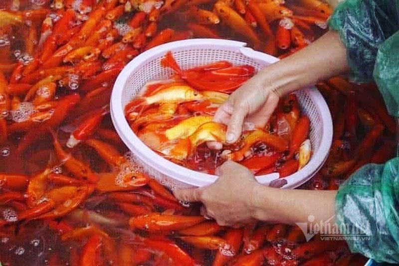 Chợ Hà Nội, khắp nơi đỏ rực một màu cá chép