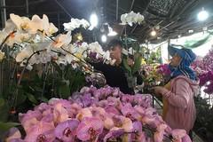 Hoa tết Việt Nam thắng đậm hoa Trung Quốc