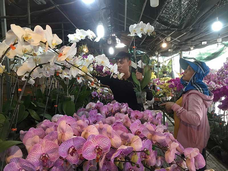 hoa Tết,hoa lan