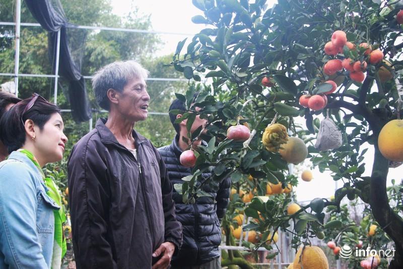 Vườn cây ghép 10 loại quả tiền tỷ, 'độc nhất vô nhị' chỉ phục vụ chơi Tết