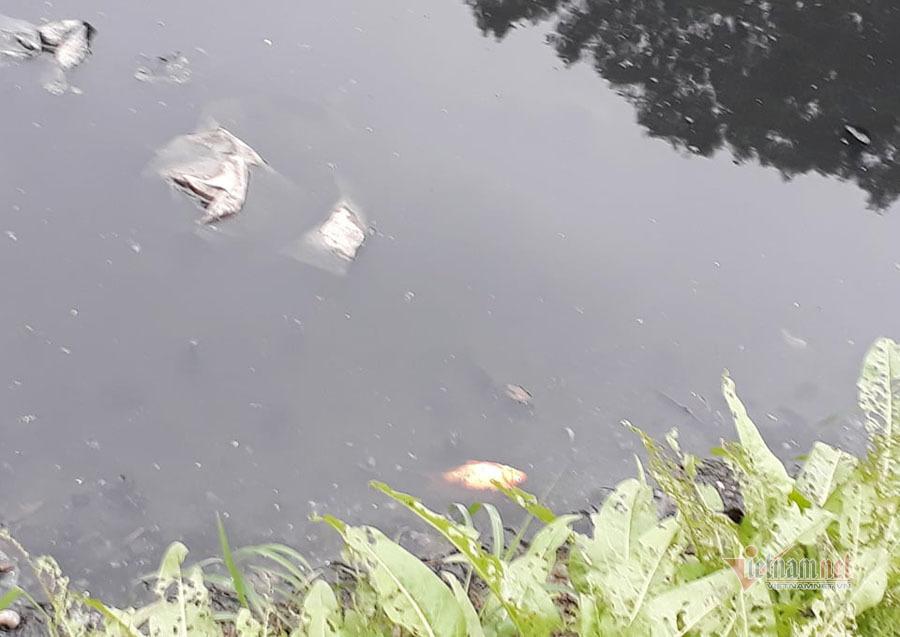 Nước sông đen kịt, bốc mùi, người Hà Nội vẫn đua nhau thả cá